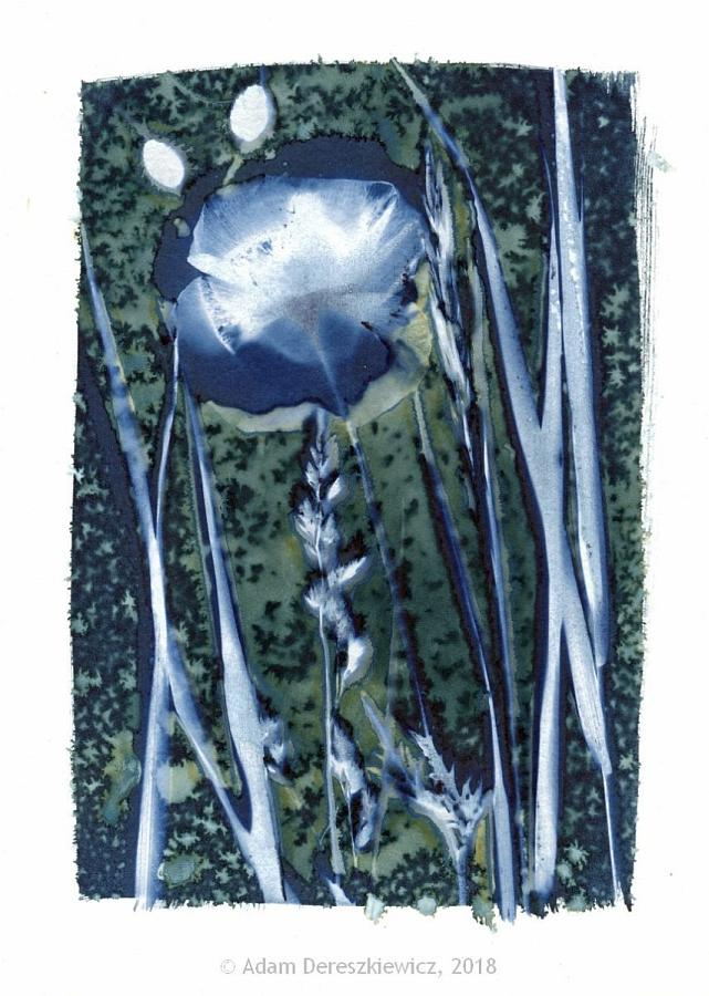Wet cyanotype handmade print - unique art item floral