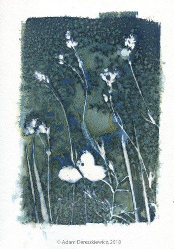 Wet cyanotype handmade print - unique art item floral