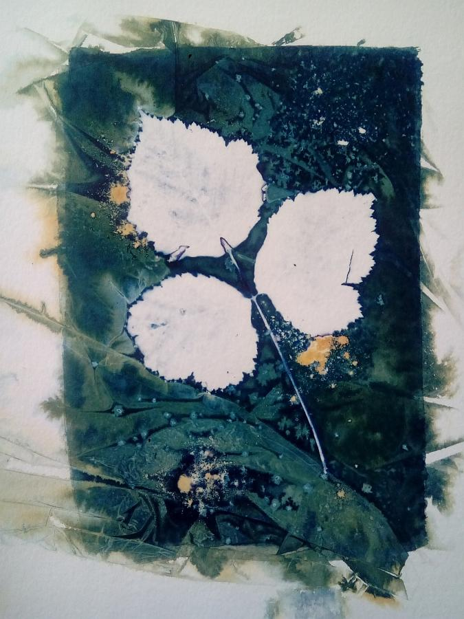 Wet cyanotype, floral photogram A4, unique print