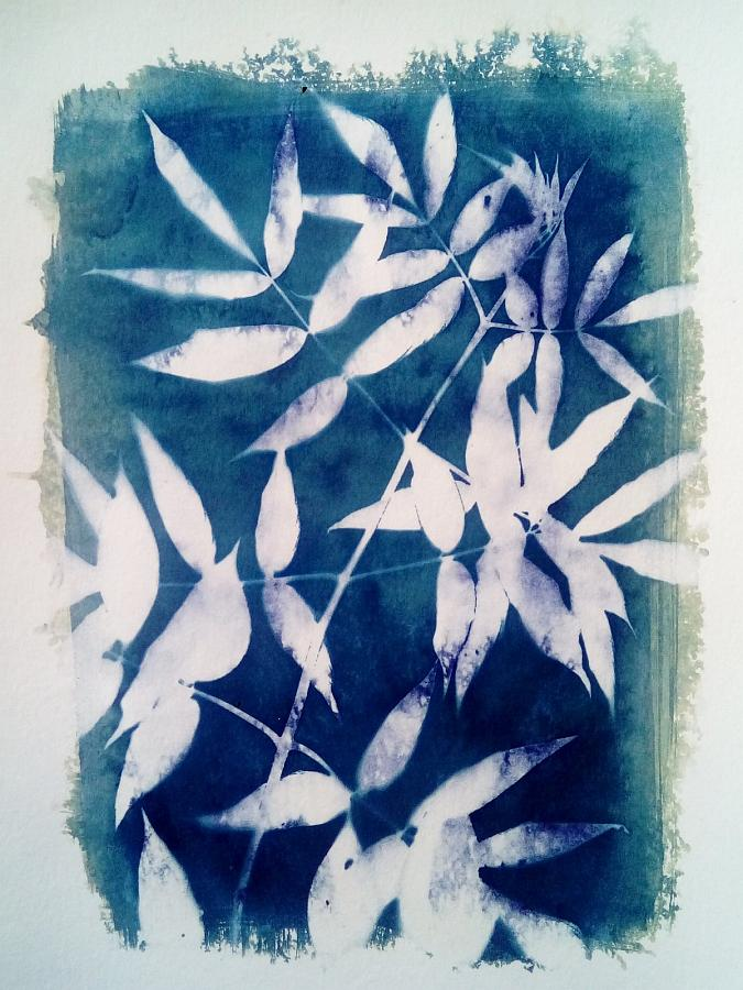 Wet cyanotype floral photogram A4, unique print
