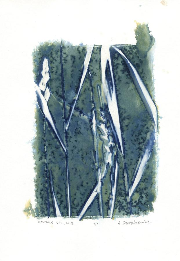 """Magical Meadows XIII"", wet cyanotype floral photogram A4, unique print"