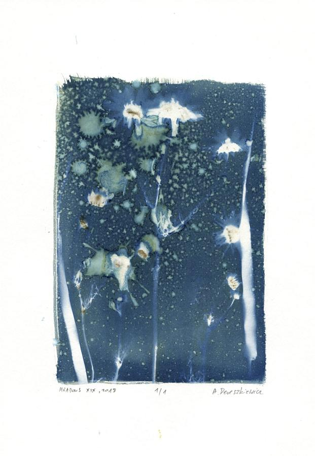 """Magical Meadows XII"", wet cyanotype floral photogram A4, unique print"