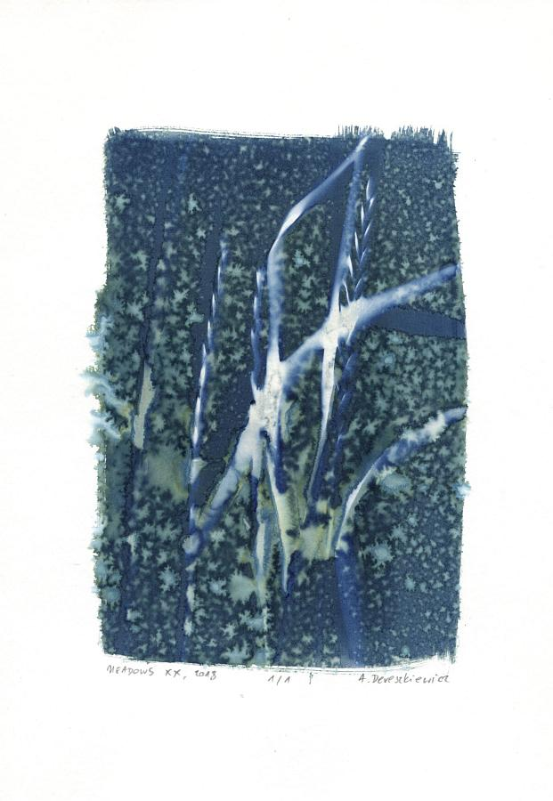 """Magical Meadows XX"", wet cyanotype floral photogram A4, unique print"