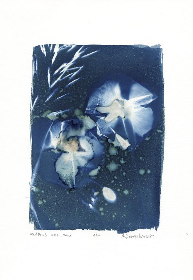 """Magical Meadows XXI"", wet cyanotype floral photogram A4, unique print"