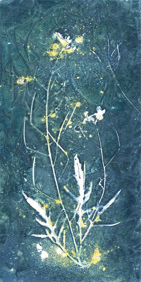 Wet cyanotype, floral photogram 420x280mm
